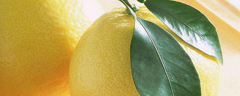 柚子是怎么长出来的