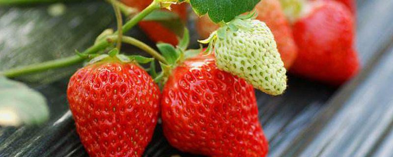 摘草莓是几月份