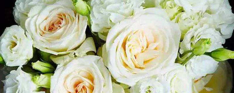 白荔枝玫瑰花语