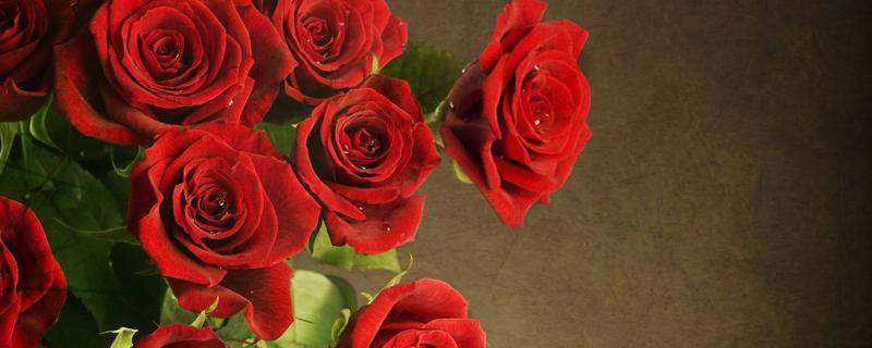 八朵玫瑰花代表什么意思