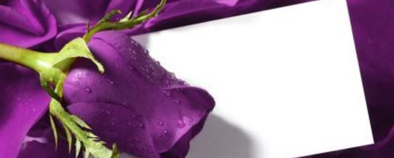 紫玫瑰花语是什么意思