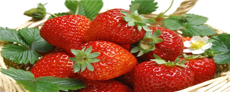 草莓开花需要授粉吗