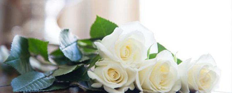 玫瑰花颜色寓意