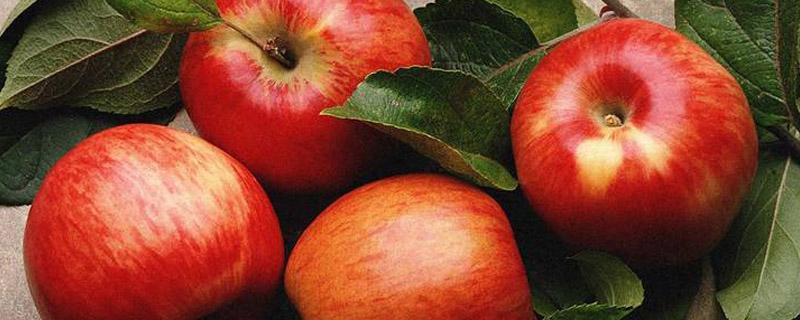 苹果树成长过程图片_苹果树适合生长在哪里 - 花百科