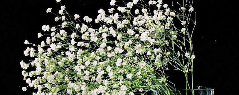 满天星鲜花花束怎么养