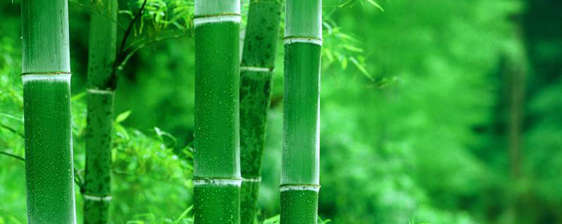 养竹子有什么讲究