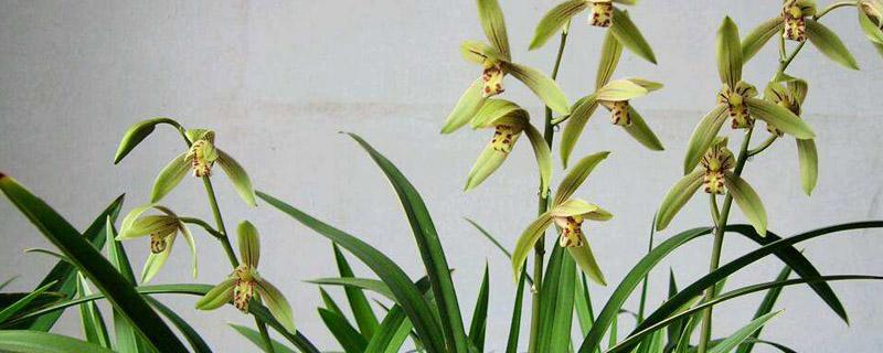 兰花怎么栽在花盆里