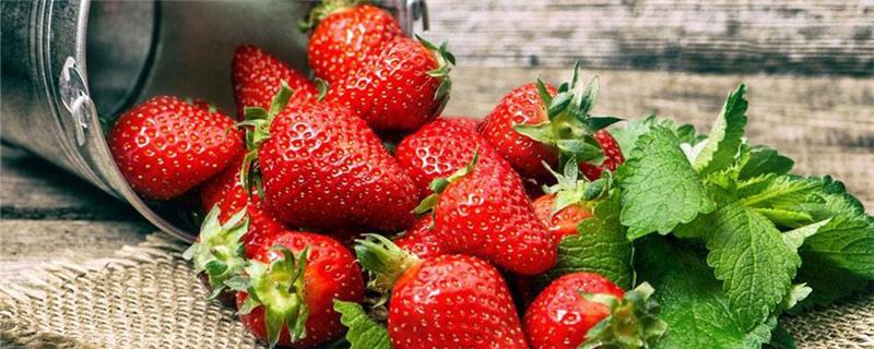 草莓长在哪里