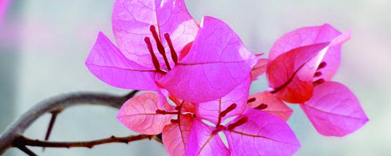 三角梅种的季节