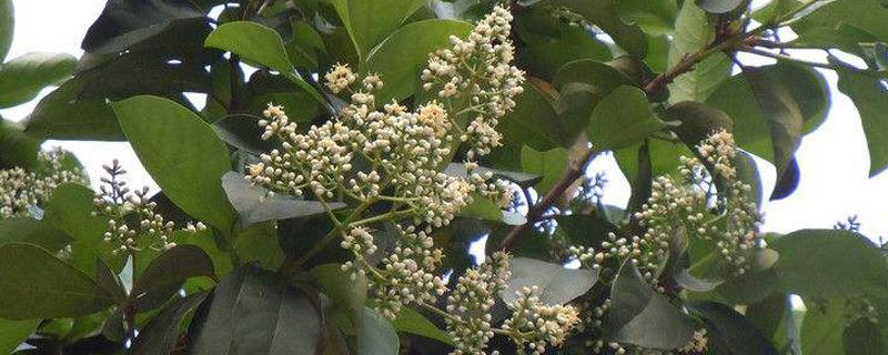 一般树木的休眠期是什么季节