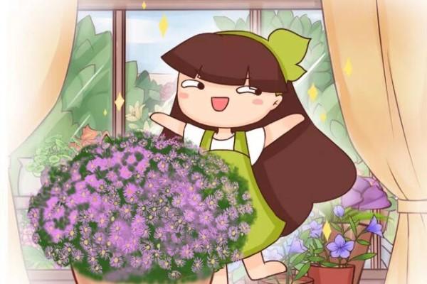 特干净的5种花,不招虫、没病害,家里养特省事儿!