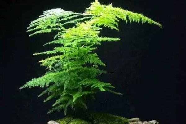 能爬10米高的花,夏天变成绿瀑布,看着就凉快!