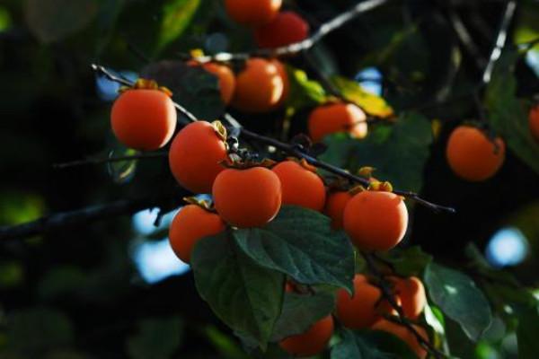 小时候吃的野果子,吃过5种以上的才是农村娃!