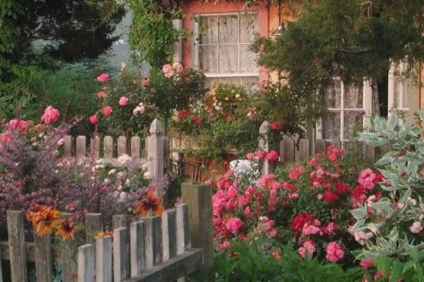 老了以后能干啥?有个小院种种花···