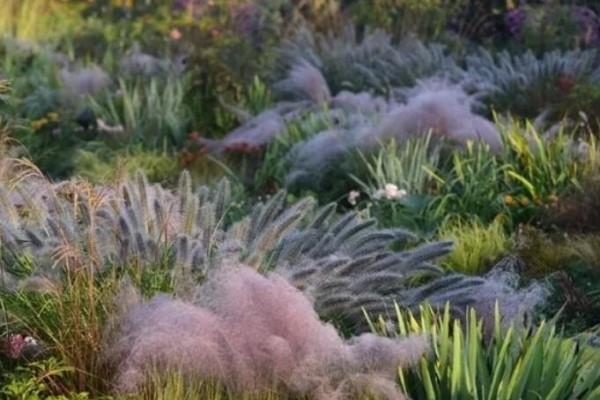 今年流行种草了,耐阴不怕晒,比花还好看!