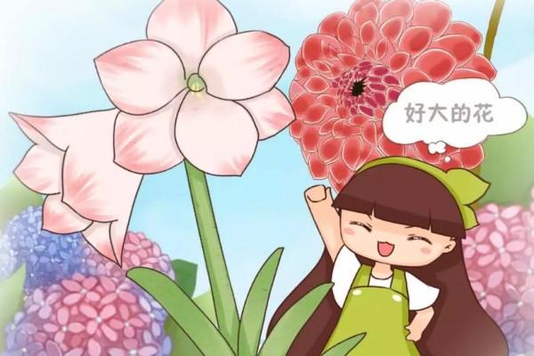6种大型花,花苞直径20公分,摆家里太大气!