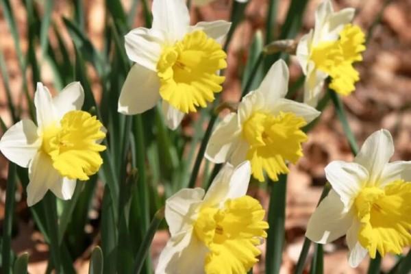 开花劳模就是它,1盆能开30朵,开起花来不要命!