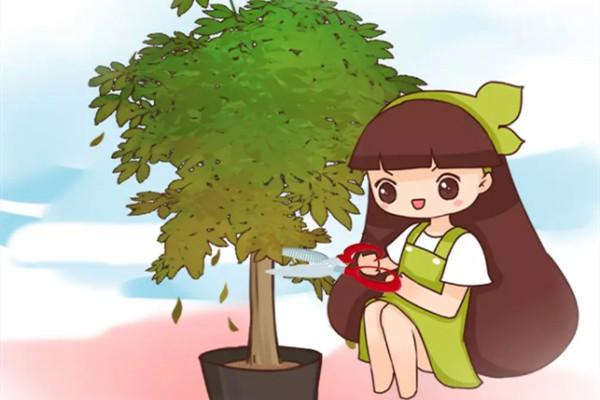 夏天养花黄叶子?赶紧剪一下,10天叶片绿的直滴油!