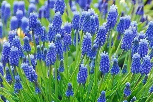 今年养盆便宜花,明年丰收一大筐,不养亏大了!