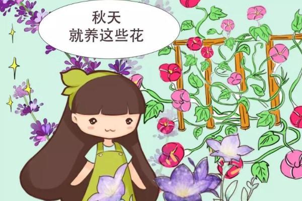 入秋就养这10种花,一开200天,-10度冻不死!