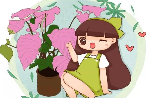 别养绿萝了,这20种耐阴花,养家里才气派!