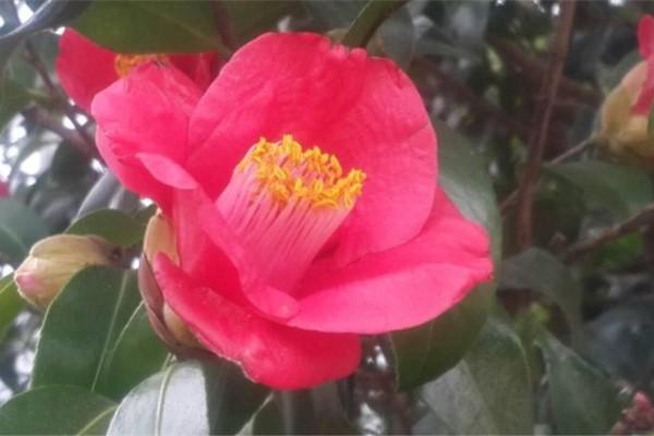 这6种花,秋天千万别换盆,否则一年不开花!