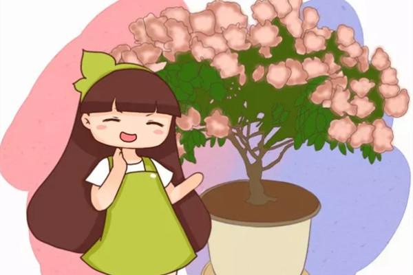 最难养的花,盆底垫上它,叶子油亮狂冒花苞!