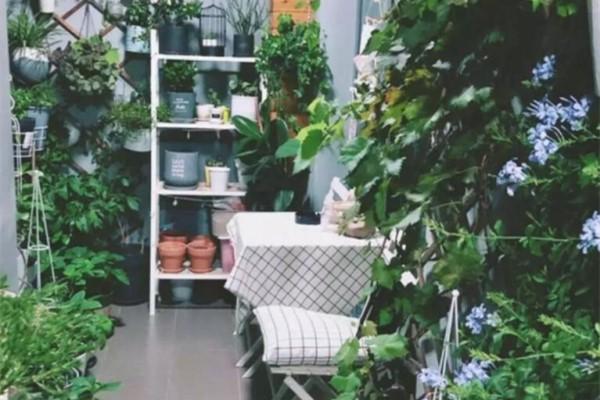阳台虽小,种点花草,不急不躁,开心就好!