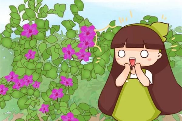 不用扦插的5种花,扔土里呼呼冒一片,1盆能养出100盆!