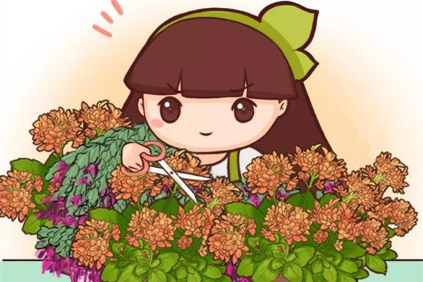 这花狠心摘叶子,5天蹭蹭冒新芽,俩月就开花!