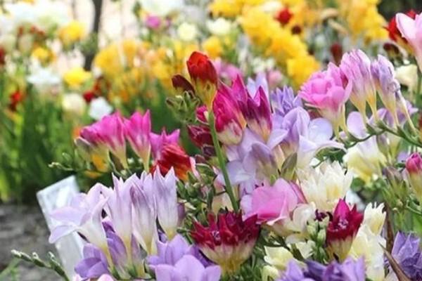 特好养的花,水越少、花越多,一串能开16朵!