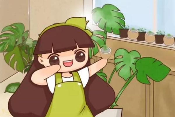 这花叶子长不大,姐姐反倒乐开花,咋回事?