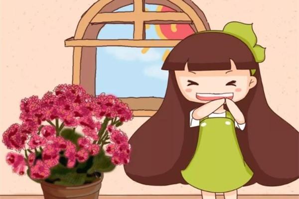 长寿花剪一刀、喂点肥,花苞蹭蹭冒,叶子绿油油!
