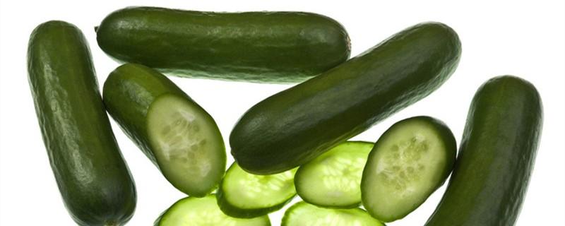 短粗的黄瓜是什么品种