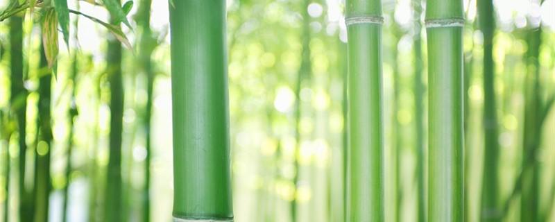 竹子的养殖方法及养护知识