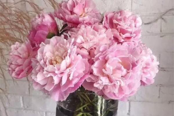 这花就得秋天种,富贵又吉祥,晚了全年不开花!