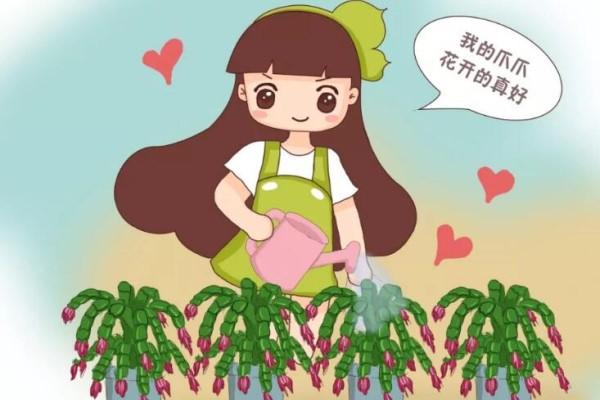 蟹爪兰叶子藏有小机关,打开它,花苞呼呼冒!