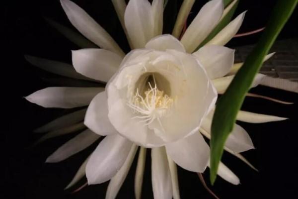 这花真稀罕,刚开花就被掐光了,花钱未必买得到!