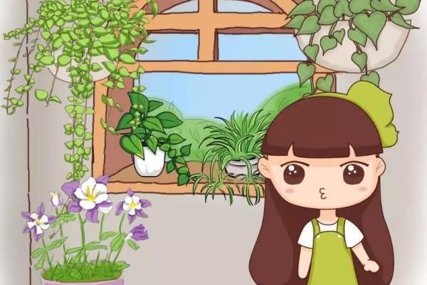 聪明人养花,都在角落摆盆它,没光也能绿油油!