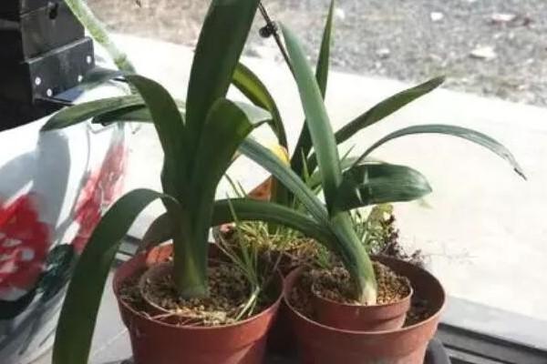 9月后,这3种花需要大补肥,灌点它,越长越有劲儿!