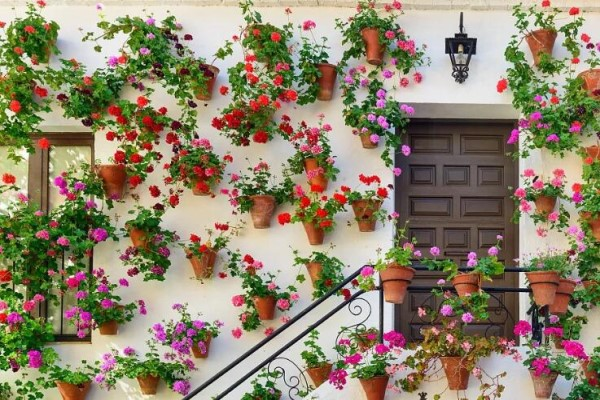 老外一个窗户,挂了99盆花,别再说没地方养花了!
