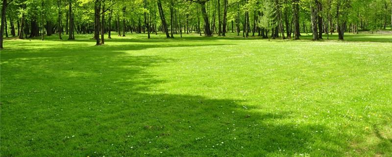 夏天草坪浇水频率