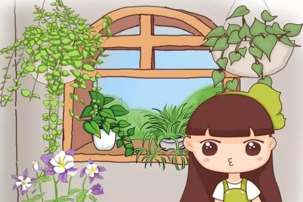 6种能养成高价盆景的植物,在家养几年,价格翻10倍!