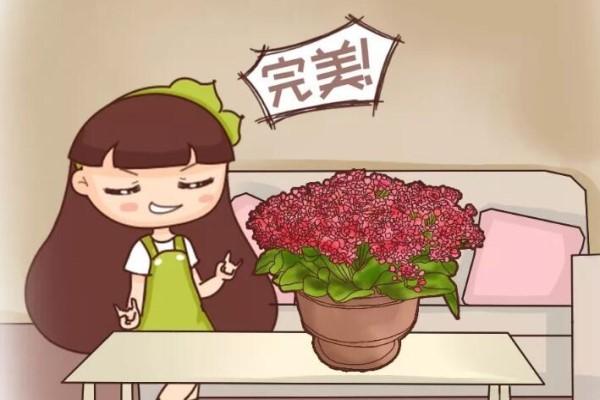 6个小窍门,养活1000盆花!
