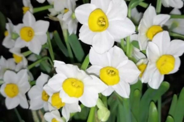 有格调的人,都爱养这花,品味高上档次!