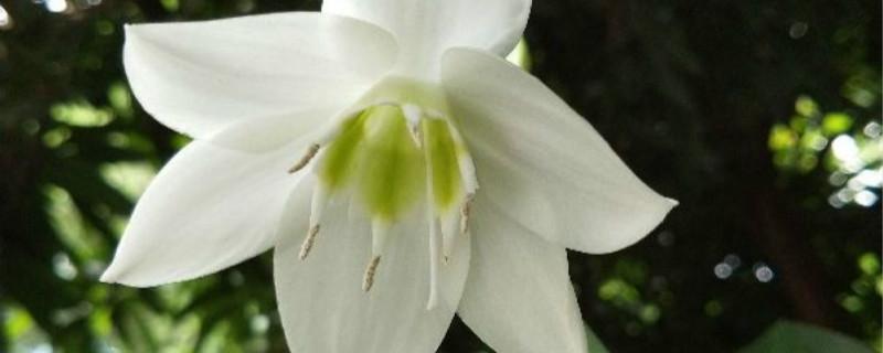 水仙花种子种植方法