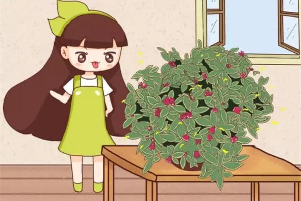 15种香水花,一间房摆一盆,满屋子都是香味!