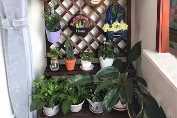阳台别晾衣服了,这个方法养花,一下子多出30盆!
