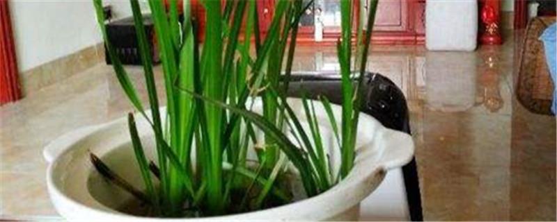 阳台如何养韭菜