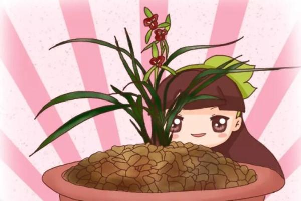 最难养的花,盆面堆个小土包,咋养都不死!